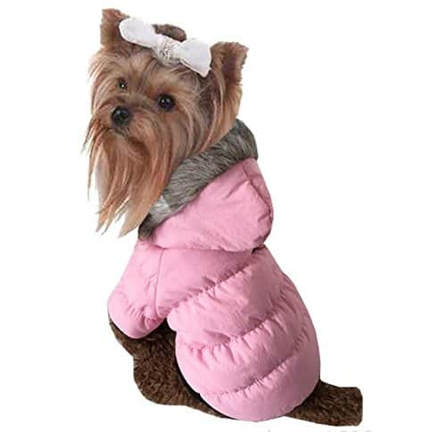 pull chien rose manteau